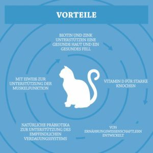 Vorteile aus einem Katzen Trockenfutter Testvergleich