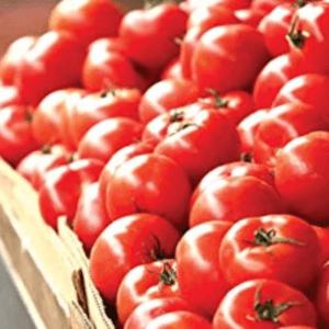 Nach diesen Testkriterien werden Tomatenketchup bei ExpertenTesten verglichen