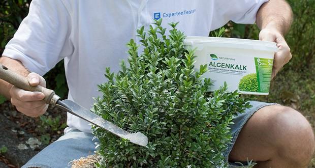 Algenkalk feinstes Pulver 100% rein für Buchsbaum von Natureflow im Test