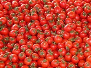 Tomaten Geerntet
