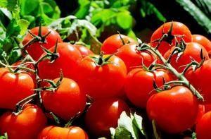 Tomaten Strauchtomaten