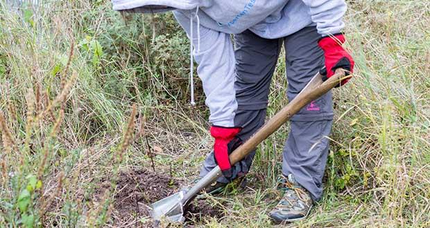 Spear & Jackson Traditioneller Edelstahl-Grabespaten im Test - der Griff ist aus Hartholz und gibt ihm so einen attraktives und gleichzeitig beständiges Äußeres