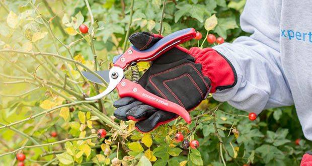 Spear & Jackson Razorsharp Bypass-Gartenschere im Test - untere Klinge aus hartverchromtem Stahl für verbesserte Rostbeständigkeit