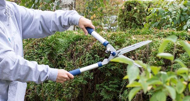 Spear & Jackson Razorsharp manuelle Heckenschere im Test - Gebogene Aluminiumhandgriffe für Stärke, mit geringerem Gewicht, mit rutschfesten Griffen für eine festen Halt während der Verwendung