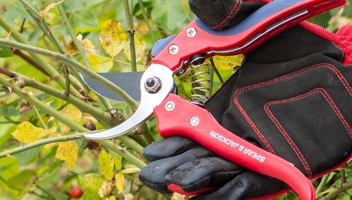 Gartenscheren im Test auf ExpertenTesten