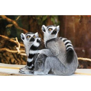 Bester Kölner Zoo online Gutscheincode