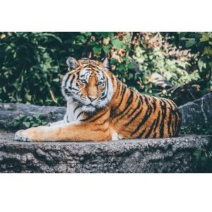 Wie viel Rabatt mit einem Kölner Zoo Gutschein?