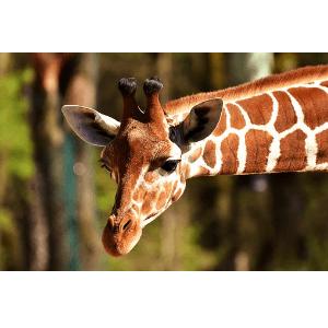 Sparen mit einem Gutschein von Kölner Zoo