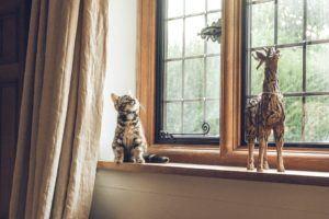 Ein zooRoyal Gutschein für Heimtierbedarf