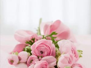 mit Lidl Gutscheinen Blumen kaufen