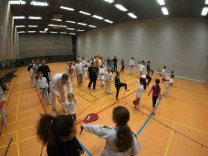 Ein Interview über den TSV Indersdorf Taekwondo
