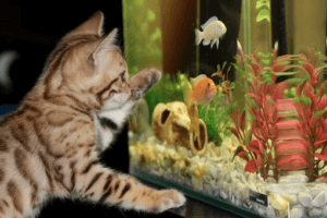 Aquarienzubehör mit Zooplus Gutschein