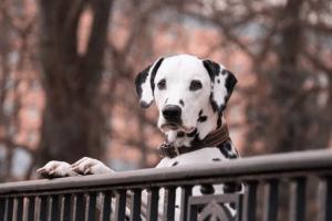 Hundefutter mit Zooplus Gutschein