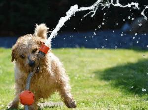 gesunder Hund mit Zooplus Gutschein
