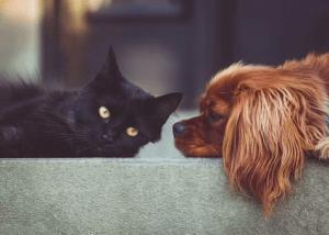 Zooplus Gutschein für Hunde und Katzen Halter