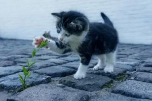 Katzenaufzucht mit Zooplus Gutschein