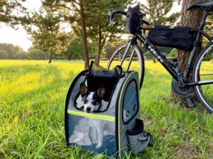 Hunderucksack Pecute beim Biken