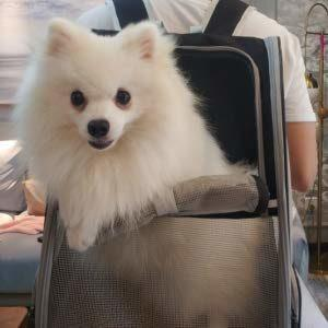 Spitz in einem Hunderucksack Texsens