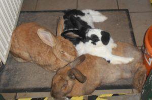 die Kaninchenhilfe in Nordfriesland