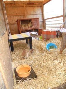 Was kann die Kaninchenhilfe Nordfriesland tun?
