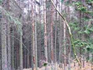 Das Interview über die Arbeit von dem Verein Forstexperten e.V.