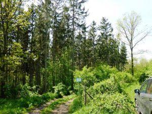 Das Interview über die Forstexperten e.V.