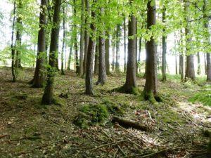 Das Interview mit Wilfried Reuder von dem Verein Forstexperten e.V.