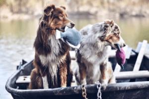 Interview mit Solveig Thun vom Onlineshop Handmade for dogs®
