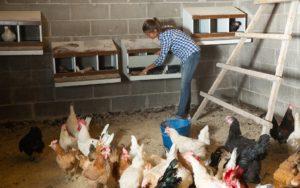 Das sind die Vorteile , einen Hühnerstall selbst zu bauen