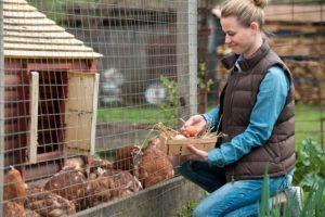 Wie viel kostet der Bau eines selbstgebauten Hühnerstalls?