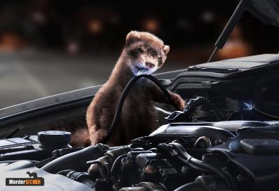 Autoschutz vor Madern im MarderSICHER Shop kaufen