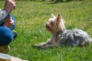 Warum sollen Sie Online Hundeschule nutzen?
