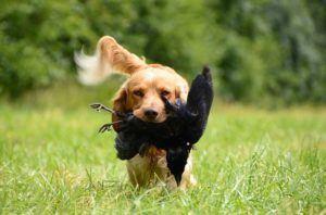 Auf diese Tipps müssen bei einem Online Hundetraining + Testsiegers Kauf achten?