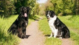 Welche Hundehalter profitieren von der Teilnahme an einem Hundetraining Online - unsere Erfahrungen?