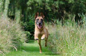 Wie viel Euro kostet ein Online Hundetraining Testsieger?