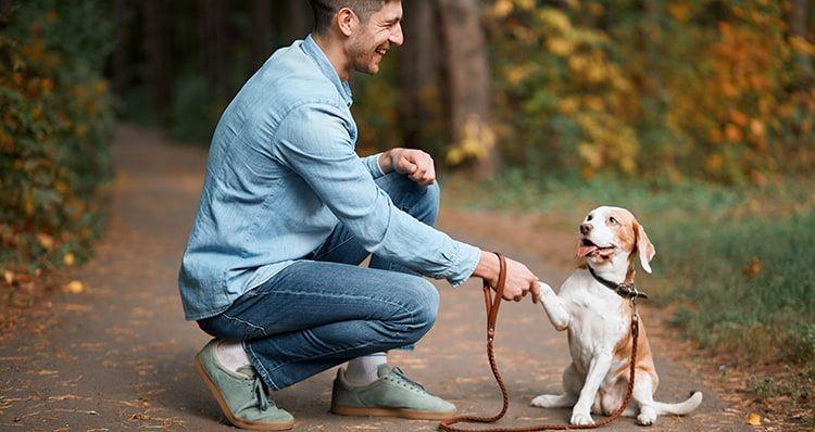 Online Hundetrainings im Test auf ExpertenTesten.de