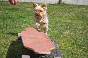 Ist ein Online Hundetraining ebenso gut, wie eine Hundeschulen vor Ort?