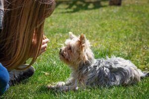 Alles wissenswerte aus einem Online Hundetraining Test