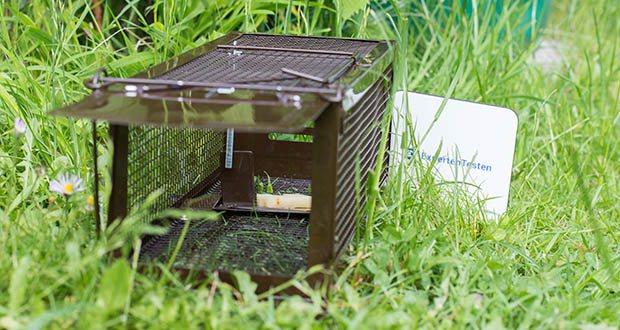 Ratzfatz Quickcatch MTBSL20 Mausefalle im Test - fängt Tiere schnell & effizient - ohne diesen Schaden zuzufügen