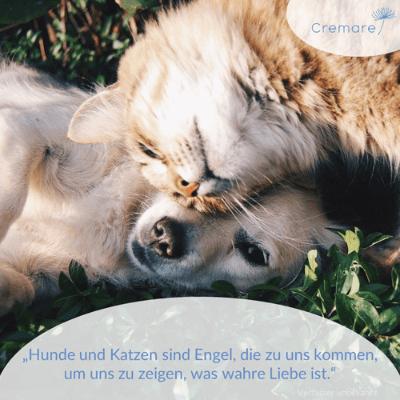 Das Interview mit Anja Pallinger von Cremare Tierkrematorien GmbH