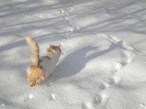 Katze tapst im Schnee