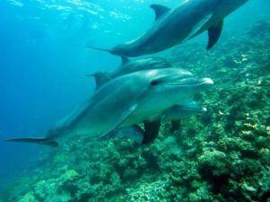 Delfine mit Unterwasserkamera aufgenommen
