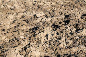 Welche Arten von Mutterboden gibt es in einem Preisvergleich?