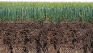 Worauf muss ich beim Mutterboden Preisvergleich achten?