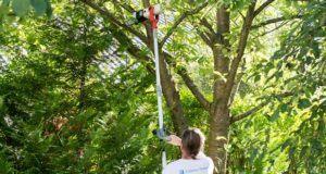 Sind Teleskop-Heckenschere aus dem Test und Vergleich für Bäume geeignet