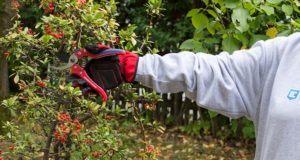Die Testfragen zu den besten Produkten aus der Kategorie Gartenschere