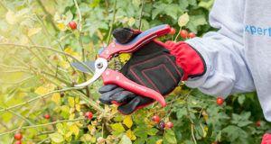 Die Handhabung vom Gartenscheren Testsieger im Test und Vergleich