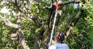Welche Teleskop-Heckenscheren sind am besten für den Baumschnitt aus dem Test