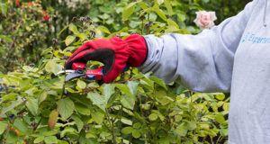 Nach diesen Testkriterien werden Gartenscheren bei ExpertenTesten verglichen