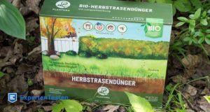Darum ist Eisen im Rasendünger so wichtig für die Pflanzen!